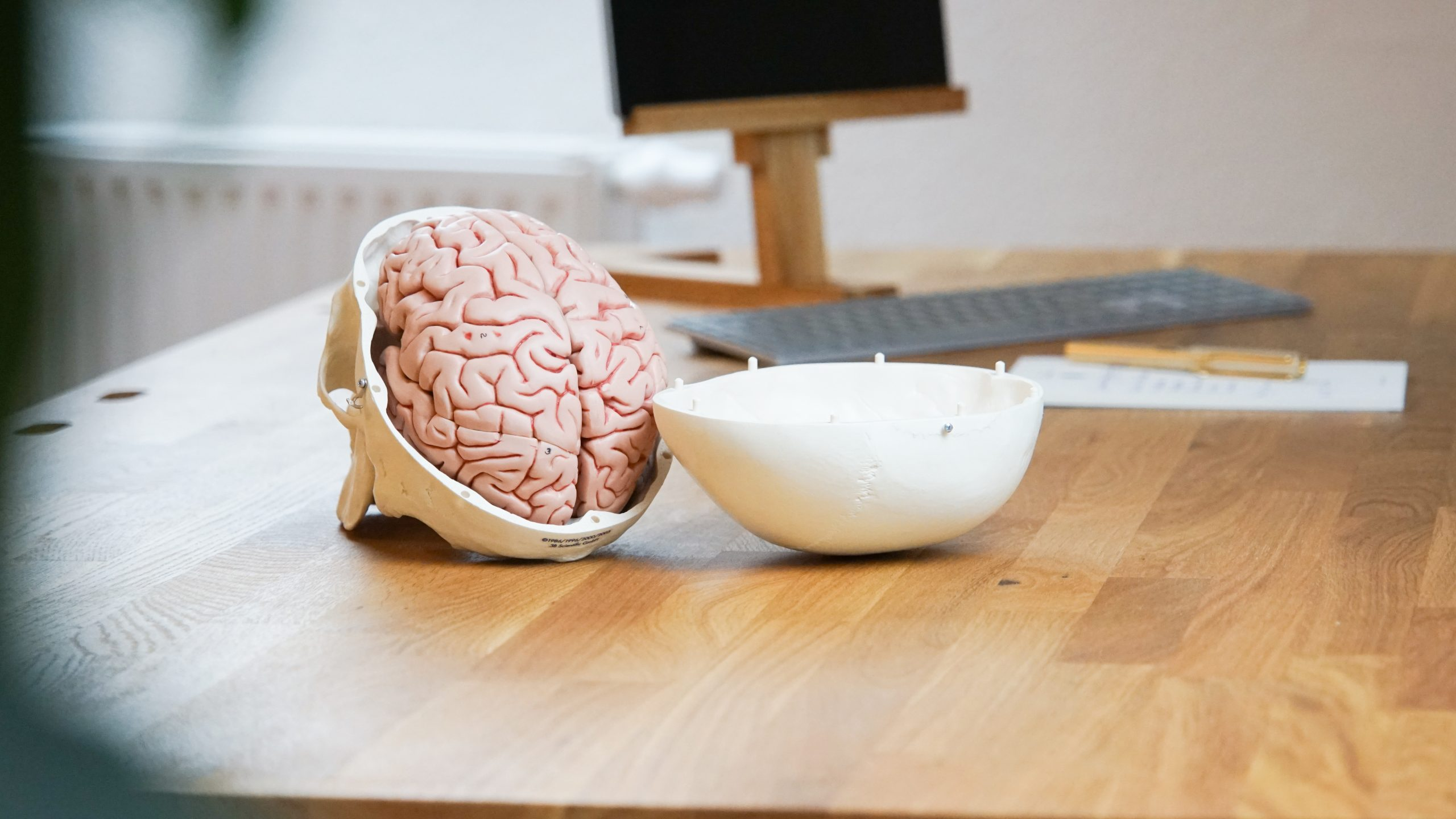 Das Modell eines menschlichen Gehirns liegt auf einem Holztisch.